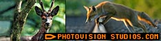 Photography website including inspiring Wildlife Photography and Digital Photography