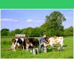 Melkende boer in Haarlo - ©Hans Hendriksen